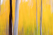 Tony Murray Framed Prints - Aspen Abstract Framed Print by Tony Murray
