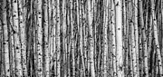Alanna Dumonceaux - Aspen and Birch Series 1