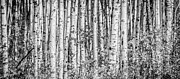 Alanna Dumonceaux - Aspen and Birch Series 2