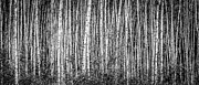 Alanna Dumonceaux - Aspen and Birch Series 3
