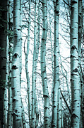 Debbie Karnes Framed Prints - Aspen Blues Framed Print by Debbie Karnes
