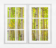 Room With A View Framed Prints - Aspen Forest White Picture Window Frame View Framed Print by James Bo Insogna