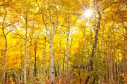 Aspens Metal Prints - Aspen Morning Metal Print by Darren  White