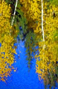 Trees Reflecting In Water Prints - Aspen Reflection Print by Pat Now