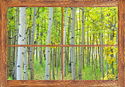 Greens Framed Prints - Aspen Tree Forest Autumn Picture Window Frame View  Framed Print by James Bo Insogna