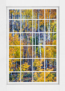 Picture Window Frame Photos Art - Aspen Tree Magic Cottonwood Pass White Window Portrait View by James Bo Insogna