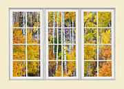 Fall Colors Autumn Colors Posters - Aspen Tree Magic Cream Picture Window View 3 Poster by James Bo Insogna
