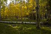 Tom Kelly - Aspens 4619