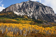 Leaves Prints - Aspens at Kebler Pass Print by Jetson Nguyen