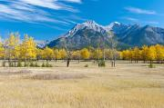 Featured Framed Prints - Aspens In A Meadow In Banff National Framed Print by Robert Brown