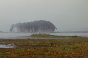 Assateague Fog Print by Joann Renner