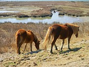 Diane Valliere - Assateague Ponies