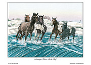 Wild Horses Drawings - Assateague Ponies by Jonathan Brown