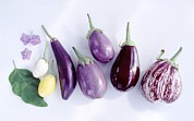 Science Photo Library - Assorted aubergines