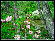 Northeast Framed Prints - Asticou Azalea Garden Framed Print by Edward Fielding