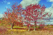 Bear Rocks Prints - Astonishing Autumn - Fall Colors at Dolly Sods I Print by Dan Carmichael