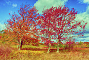 Bear Rocks Prints - Astonishing Autumn - Fall Colors at Dolly Sods II Print by Dan Carmichael