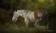 Grazing Horse Digital Art Posters - At Peace Poster by Ryan Courson