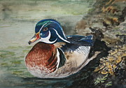 Wood Duck Painting Posters - At Rest Poster by Betty-Anne McDonald
