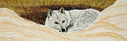 Wolf Paintings - At Rest by Debbie Chamberlin