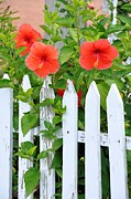 Picket Fences Posters - At The Back Gate Poster by Jan Amiss Photography