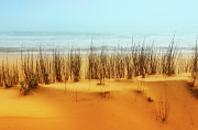 Sea Oats Prints - At the Beach - Outer Banks I Print by Dan Carmichael