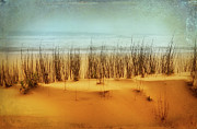 Sea Oats Prints - At the Beach - Outer Banks II Print by Dan Carmichael