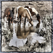 Forelock Photos - At The Watering Hole 1 D1007 by Wes and Dotty Weber
