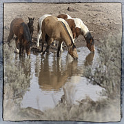 Forelock Photos - At The Watering Hole D1007 by Wes and Dotty Weber