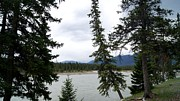 Gail Matthews - Athabasca River View