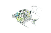 Gyotaku Prints - Atlantic Lookdown Fish Against White Background Print by Nancy Gorr