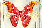 Atlas Mixed Media Posters - Atlas Moth Poster by Amy Norden