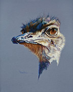 Ostrich Pastels Originals - Attitude Aftican Ostrich by Mary Dove