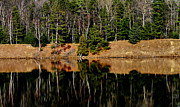 Matthew Winn Art - Au Sable Reflections by Matthew Winn