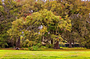Live Oaks Digital Art Framed Prints - Audubon Park painted Framed Print by Steve Harrington
