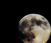 Leslie Hunziker - Aug 10 Moon