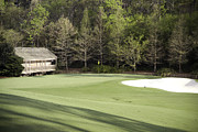 Augusta Golf Photos Art - Augusta National 11 White Dogwood Masters Photo 2 by Phil Reich