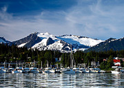 Whale Watching Prints - Auke Bay Marina Print by Robert Bales