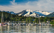 Whale Watching Prints - Auke Bay Print by Robert Bales
