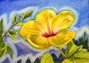 Todd Derr - Aura of Hibiscus