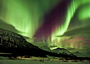 Norwegian Prints - Aurora above the Mountains Print by David Bowman