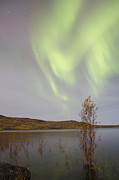 Yukon River Prints - Aurora Borealis With Moonlight Print by Joseph Bradley