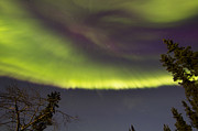 Bare Trees Metal Prints - Aurora Borealis With Trees, Whitehorse Metal Print by Joseph Bradley