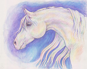 Aurora Drawings - Aurora Equus by Tricia Griffith