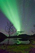 Norway Prints - Auroras and tree Print by Frank Olsen
