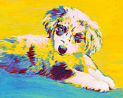 Aussie Framed Prints - Aussie Puppy-yellow Framed Print by Jane Schnetlage