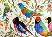 Finch Drawings Metal Prints - Australian Birds Metal Print by Roberto Gagliardi
