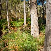 Tim Hester - Australian Bush Landscape