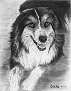 Sheepdog Drawings - Australian Shepherd Dog Sketch by Kate Sumners