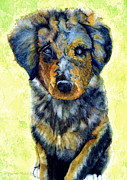 Canines Painting Framed Prints - Australian Shepherd Puppy Framed Print by Janine Riley